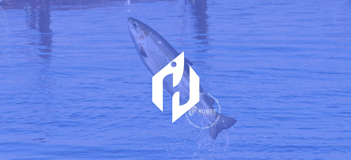 Thiết kế logo công ty Hưng Thịnh Phát Bio